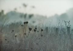 losing mind (pancolar user) Tags: grey greytones losing mind telephoto landscape 180mm mog meyeroptikgörlitz primotar180 primotar180mm primotar primotar180mmf35 contax rts contaxrts analogue analoque fotografiaanalogica argentique film shootingfilm kodak