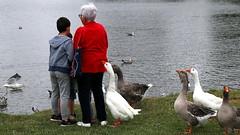 Toc Toc ... (patrick_milan) Tags: red bird rouge goose oie eau water saint renan finistere bretagne
