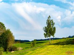 Landschaft (hrbiemcknips) Tags: landschaft garten