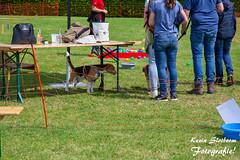 2019-05-19_Beagle Spektakel Heteren_KS-36