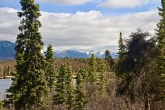 Rock Lake Vista (neukomment) Tags: alaska road nabesnaroad mentastamountains mountains may 2019 spring wiiderness canoneosrebelt5i 18250mmf3563dcosmacrohsm sigmalens