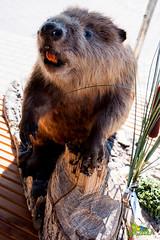 """foto adam zyworonek fotografia lubuskie iłowa-7561 • <a style=""""font-size:0.8em;"""" href=""""http://www.flickr.com/photos/146179823@N02/47830801712/"""" target=""""_blank"""">View on Flickr</a>"""