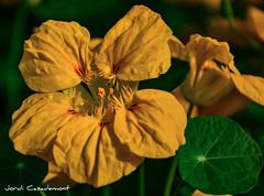 Jordi Casademont (jordicasademontperez) Tags: família flors groga jardí paisatges