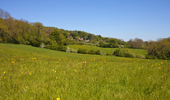 Kent country Lanes.. Rural Views (Adam Swaine) Tags: rural ruralkent england english englishlandscapes kent kentishlandscapes aonb northdownskent britain british counties countryside canon spring springinkent fields kentfields buttercups uk ukcounties county countrylanes 2019