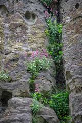 Nottingham Castle Sandstone Wall (Geraldine Curtis) Tags: nottingham castle sandstone wall