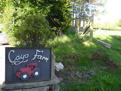 Longtown (gwallter) Tags: longtown cayo farm