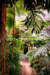 Barbican Centre Conservatory (Jessica Hicks) Tags: london barbican centre conservatory door plant plants green nature flower flowers
