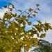 #132/365 Autumn finally arrives in Gondwanaland