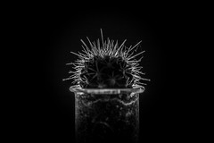 Week 20 - Cactus (Richard Steventon) Tags: backlit cactus monochrome testtube