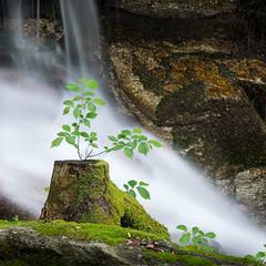 Aveva appena piovuto (Paolo-Do) Tags: verde boschi tree alberi mosso torrenti torrente