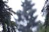 Rain drops on the frosty window (YU-bin) Tags: raindrops frostywindow fog nature frost hoax globalwarming trees dew may192019 spring
