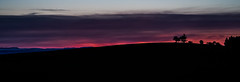 Sunset silhouette panorama, Union Hill, OR (Blue Prince Photography) Tags: sunset silverfallsstatepark silverfalls oregon color colors pink sky purple blue landscape tree silhouette overlook scenery eyecandy pnw pacnorwest pacificnorthwest cascadia olympus omd olympusomdem10iii mirrorless