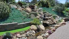 190504 243 Fallbrook Garden Tour - House 5 on Calle Linda, Senecio mandraliscae, Echium candicans, Oscularia deltoides, Agave 'Blue Glow', Echeveria 'Afterglow'