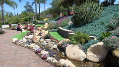 190504 245 Fallbrook Garden Tour - House 5 on Calle Linda, Senecio mandraliscae,  Oscularia deltoides 'Compact Form', Phoenix roebelenii, Echium candicans