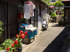 Tokyo alley / red flower (kasa51) Tags: alley redflower pottedplant laundry futon stairs 路地裏 赤い花 洗濯物 布団干し 階段