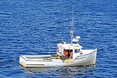 DSC03480 - Bay Bliss - Caught One!!!! (archer10 (Dennis)) Tags: sony a6300 ilce6300 18200mm 1650mm mirrorless free freepicture archer10 dennis jarvis dennisgjarvis dennisjarvis iamcanadian novascotia canada glenmargaret shadbay fishing boat baybliss lobster white trap