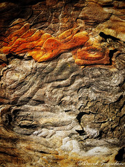 Contours (Dave Snowdon (Wipeout Dave)) Tags: davidsnowdonphotography iphone iphonese closeup abstract intothewood bark tree naturalabstract