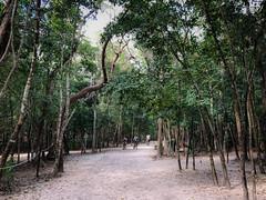 Trail in the Cobá Maya Ruins - Coba Mexico (mbell1975) Tags: tulum quintanaroo mexico trail cobá maya ruins coba yucatán peninsula yucatan mayan archeological park parc jungle forest woods tree trees treetop