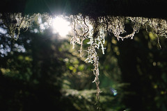 treehousepoint_29 (natashatakasato) Tags: washington treehousepoint moss morning sunrays pnw wedding forest sonya6000