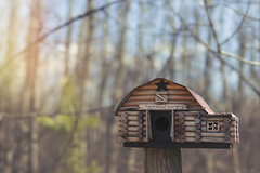 the middle of know where (rockinmonique) Tags: birdhouse logcabin woods forest country alberta back40 light bokeh blue green brown moniquewphotography canon canont6s tamron tamron45mm copyright2019moniquewphotography
