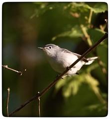 Tiny bird (vui.la9) Tags: