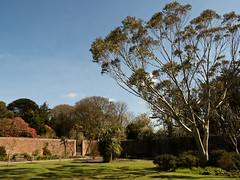 mull of galloway logan botanic garden-4131536 (E.........'s Diary) Tags: eddie ross olympus omd em5 mark ii spring 2019 logan botanic garden mull galloway dumfries
