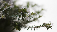 Flowers she picked. (périple) Tags: flowers nature life beautiful living slowliving camera canon t6 white bright