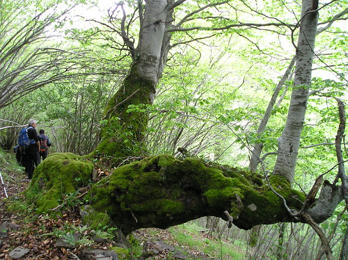 Senderismo por ruta del Valle de Altuzarra Ezcaray Fotografia Javi Cille (15)