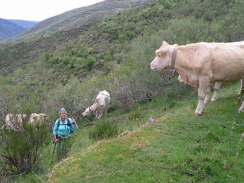Senderismo por ruta del Valle de Altuzarra Ezcaray Fotografia Javi Cille (12)