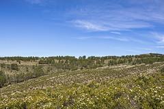 Al arcén del camino (lebeauserge.es) Tags: cerveradebuitrago madrid españa naturaleza campo