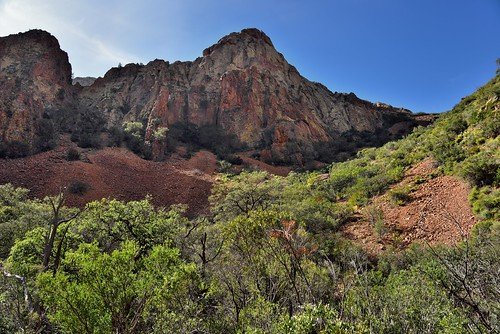 A Hillside of Trees Before a Mountainside of Textures and Colors (Big Bend National Park)