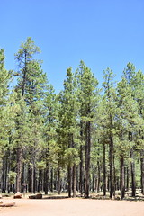 Coconino National Forest (Pictures by Ann) Tags: arizonatrip arizona2017 arizona az cocochino coconinonationalforest lavatubes unsupervised onyourown explore exploration fun discovery underground cold chilly flagstaff tallpines