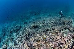 wonder world (Lea's UW Photography) Tags: lealee canon5dmk3 subal canonef815mm fisheye wideangle bunaken underwater corals