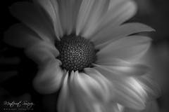 Chiribita (monsugar) Tags: blancoynegro art photo margarita naturaleza abstraccion luces sombras