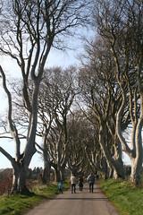 IMG_3571 (SomeThingsIKnow) Tags: darkhedges beech trees p n chris melanie