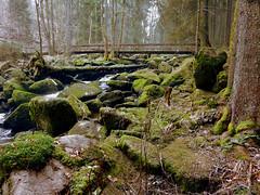 bavarian stream (erix!) Tags: stones stream bach wildbach moos moss forest forst bayern