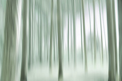 forest blur (Hal Halli....happy everything!!) Tags: forest blur nature abstract dream homedecor wallart