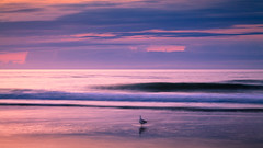 Morning Seagull (FriendofLight) Tags: wrightsville beach seagull sunrise waves ocean clouds moody bird longshutter canon 5dm2 morning