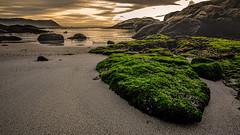 Boulders Beach (AndreDiener (ALDPhoto)) Tags: beach moss green sunrise yellow cloudssand clouds sand landscape scene water ocean sea atlantic salt