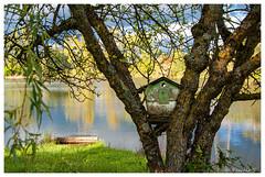 Maison avec vue (Pascale_seg) Tags: paysage landscape riverscape river étang reflets riflessi reflections printemps spring primavera vert green nature natura arbres trees maison house abripouroiseaux oiseaux éclaircie moselle lorraine grandest france nikon