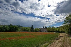 _IMG1374 (polipao) Tags: campi field papaveri cielo sky nuvole clouds natura nature country relaxing quiet peace alberi trees montefeltro marche ilobsterit campagna casadicampagna countryhouse poppies