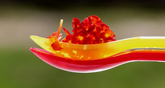 Two Scoops of Nature! (francepar95) Tags: macromondaysandaspoonful macromondays spoonful theme week challenge spoons scoops flowers lantana hmm macro redandyellow fragrant nature