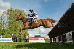Race 7 BONUS - Missbellatrix (JTW Equine Images) Tags: p2p point pointtopoint knutsford cheshire tabley nh racing horse equine jockey trainer jumps