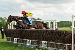 Race 6 BONUS - Pelegrine Falcon-3 (JTW Equine Images) Tags: p2p point pointtopoint knutsford cheshire tabley nh racing horse equine jockey trainer jumps