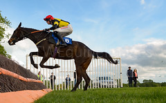 Race 6 BONUS - Pelegrine Falcon (JTW Equine Images) Tags: p2p point pointtopoint knutsford cheshire tabley nh racing horse equine jockey trainer jumps