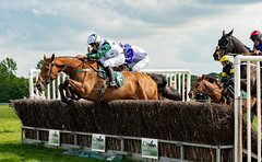 Race 5 - Duke Arcadio-10 (JTW Equine Images) Tags: p2p point pointtopoint knutsford cheshire tabley nh racing horse equine jockey trainer jumps