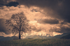 The tree (Marc Andreu) Tags: tree cloud dramatic mountain landscape nature background outdoor sky green fog beautiful view hill environment natural morning season scene sunlight sunrise color rock spring meadow mist grass sunset autumn graphic park weather peak scenery valley dawn blue plant design bright hiking art scenic land marcandreu