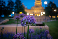 Capitol Blooms (Phil Roeder) Tags: desmoines iowa leica leicax2 flowers flower bloom blossom iowastatecapitol capitol statecapitol purple