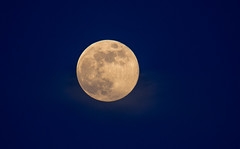 Full Moon (Torok_Bea) Tags: moon fullmoon nikon nikond7200 natur nature bluehour kékóra wonderful tamron150600 tamron káptalanfüred fantastic amazing awesome telihold