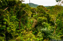 Over the roof of the jungle (dudi_dudewitz) Tags: jungle trees wildnis green adventure roof panama travel travelphotography nature naturephotography landscape landscapephotograpy gamboa rainforest outdoor explore